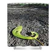 Whirly-gigs On The Path Shower Curtain