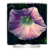 Whispered Glory Shower Curtain