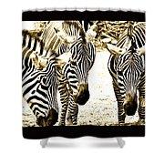Whispering Zebras Shower Curtain