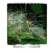 Whispy Seeds Shower Curtain