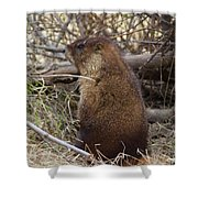 Whistle Pig Shower Curtain