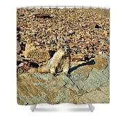 Whistle Pig Of The Rockies Shower Curtain