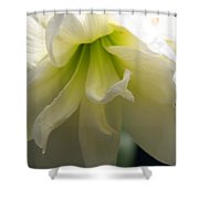 White Amarillys Close Up Shower Curtain