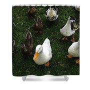 White And Brown Ducks Shower Curtain