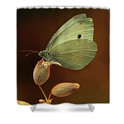 White And Green Butterfly On Dried Flowers Shower Curtain