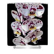 White And Magenta Orchids Shower Curtain