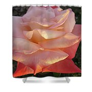 White And Peach Shower Curtain