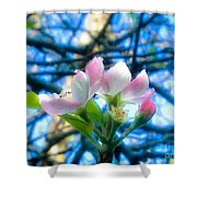White And Pink Apple Blossoms Against A Blue Sky Shower Curtain