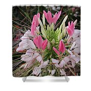 White And Pink Flower Shower Curtain