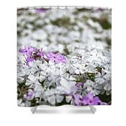 White And Pink Flowers At Botanic Garden In Blue Mountains Shower Curtain