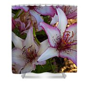 White And Pink Lilies Shower Curtain