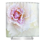 White And Pink Ornamental Kale Shower Curtain
