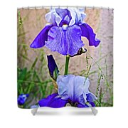 White And Purple Irises At Pilgrim Place In Claremont-california- Shower Curtain