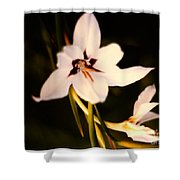 White And Purple Lily Shower Curtain