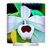 White And Purple Orchid In Greenhouse At Pilgrim Place In Claremont-california Shower Curtain