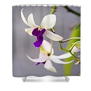 White And Purple Orchid Shower Curtain