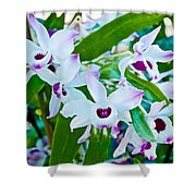White And Purple Orchids In Greenhouse At Pilgrim Place In Claremont-california Shower Curtain