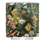 White And Yellow Chrysanthemums In The Garden At Petit Gennevilliers Shower Curtain