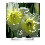 White And Yellow Daffodil 8887 Idp_2 Shower Curtain