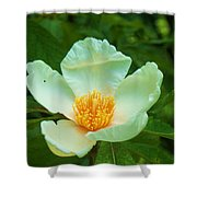 White And Yellow Flower Shower Curtain