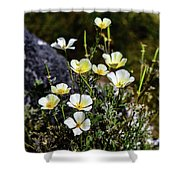 White And Yellow Poppies 1 Shower Curtain