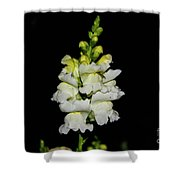 White And Yellow Snapdragon Shower Curtain