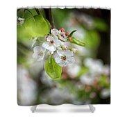 White Apple Flowers Shower Curtain