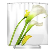 White Arums In Studio. Flowers. Shower Curtain
