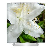 White Azalea Flower 9 Azaleas Raindrops Spring Art Prints Baslee Troutman Shower Curtain