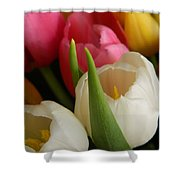 White Balance In Spring Shower Curtain