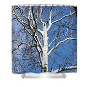 White Bark Shower Curtain