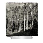 White-barked Birch Forest 3 Shower Curtain