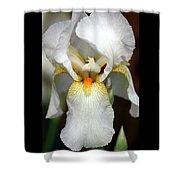 White Bearded Iris 2 Shower Curtain