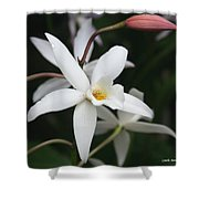White Beauty Dove Shower Curtain