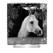 White Beauty - Series #5 Shower Curtain