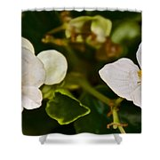 White Begonias At Pilgrim Place In Claremont-california Shower Curtain