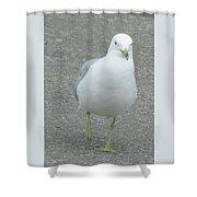 White Bird Of Alberta Shower Curtain