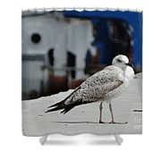 White Bird Port Burgas Shower Curtain
