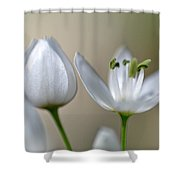 White Blossom 1 Shower Curtain
