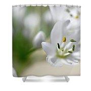 White Blossom 2 Shower Curtain
