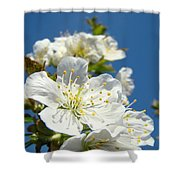 White Blossoms Art Prints Spring Tree Blossoms Canvas Baslee Troutman Shower Curtain