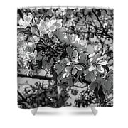 White Blossoms In Black And White Shower Curtain