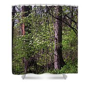 White Blossoms In The Woods Shower Curtain