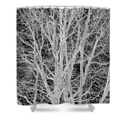 White Branches Shower Curtain