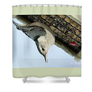 White Breasted Nuthatch At The Suet Feeder Shower Curtain