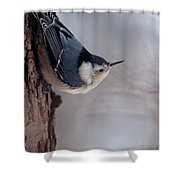 White-breasted Nuthatch Shower Curtain