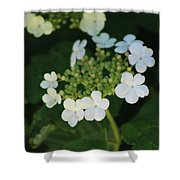White Bridal Wreath Flowers Shower Curtain