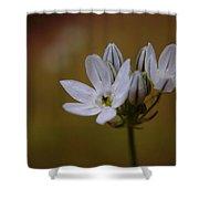 White Brodiaea Shower Curtain