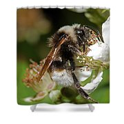 White Bumblebee Shower Curtain