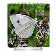 White Butterfly At The Good Earth Market Shower Curtain